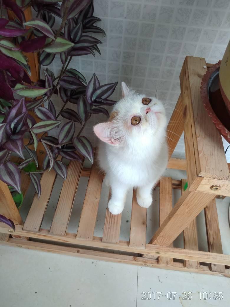 加菲猫,萌萌哒~|宠物乐园-丹阳翼网